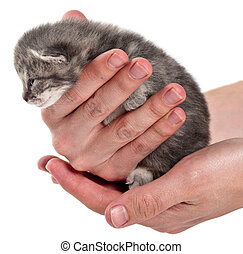 gray kitten in hand