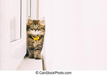 Gray kitten on window sill