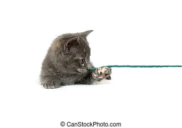 Gray kitten playing with yarn
