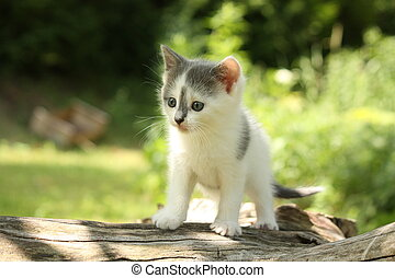 Gray kitten sitting on the tree branch - Gray small kitten...
