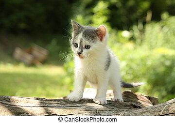 Gray kitten sitting on the tree branch - Gray small kitten...