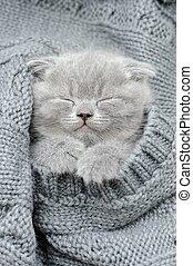 Gray kitten sleep in gray clouth
