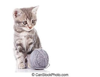 gray kitten with a ball