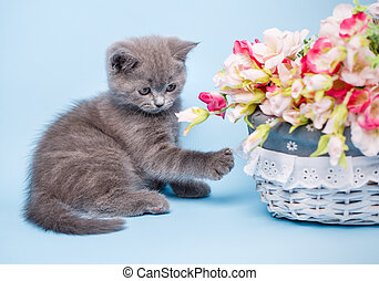 Kitty and flowers on a light blue background