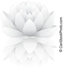 Gray lotus