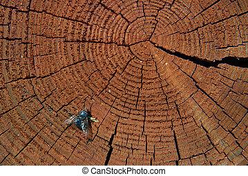 Gray meat fly on the cut of mahogany