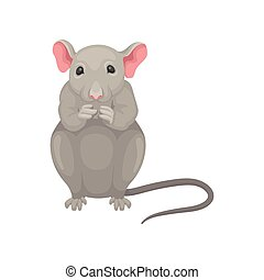 Gray mouse sitting isolated on white background. front view. Small rodent with big pink ears and long tail. Flat vector icon