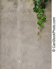 Gray old concrete wall and plant leaves green abstract background