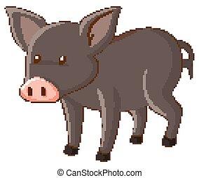 Gray pig on white background