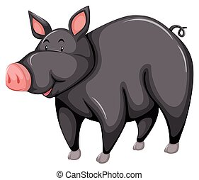 Gray pig - One gray pig on a white background