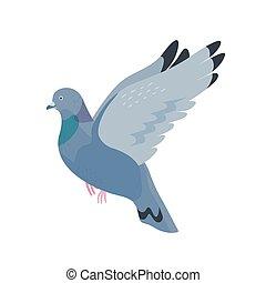 Gray pigeon flat vector illustration. Fauna, wildlife, town ...