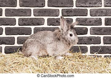 Gray rabbit near a brick wall
