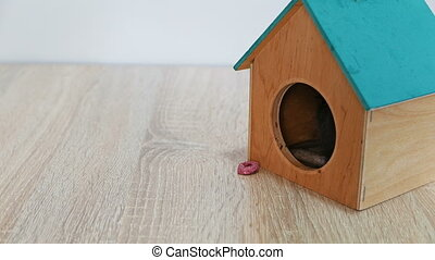Gray rat in a wooden house