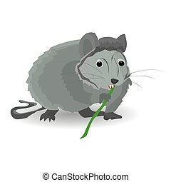 Gray rat sits and nibbles on a bamboo, on a white background,