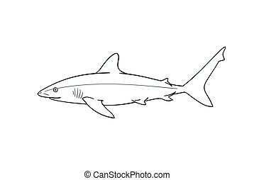 Gray reef shark fish vector