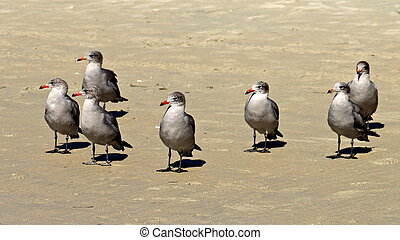 Gray Seagulls on Beach Looking Left
