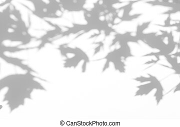 gray shadow of the leaves on a white wall