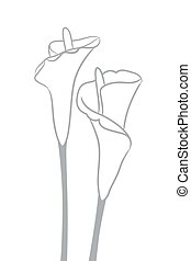 Gray silhouettes of calla lilies