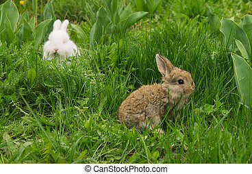 gray small rabbit sitting in the grass