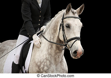 Gray sport horse portrait isolated on black background