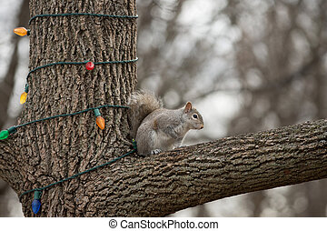 A gray squirrel clings to the side of a tree decorated with colorful holiday lights in winter