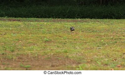 gray starling and wagtail - I took the gray starling which...