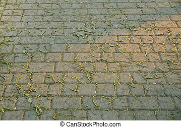 gray stone texture of dirty paving slabs in small green branches