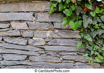 gray stone wall with creeping ivy