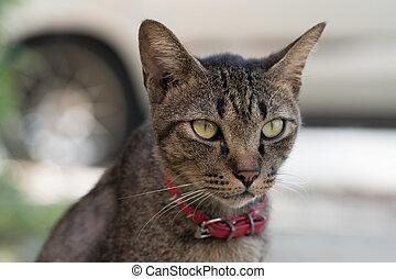 Gray striped cat - Closeup of beautiful gray striped cat...