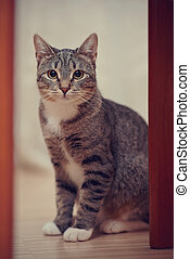 Gray striped cat with white paws and yellow eyes