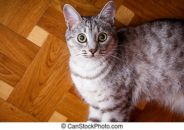 gray tabby cat on the wooden floor