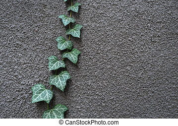 Gray wall with ivy