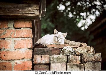 Gray-white cat near the house
