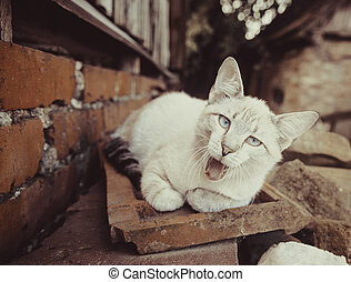 Gray-white cat outdoor