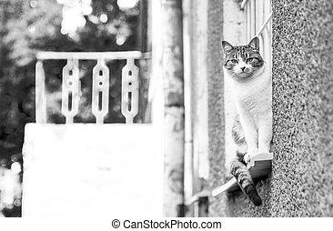 Gray-white cat outdoor