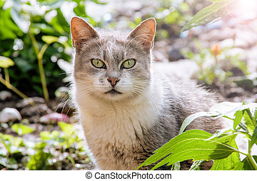 Gray white cat sitting in the grass
