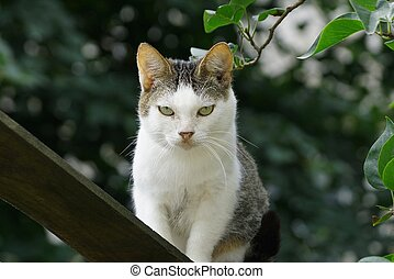 gray white cat stands on a board near a branch with green leaves