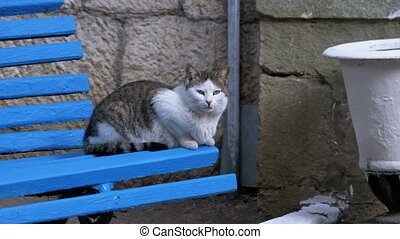 Gray with white homeless cat sitting on a wooden bench in the park