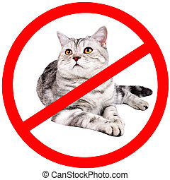 cat - grayl adult cat, breed scottish-straight, prohibiting...