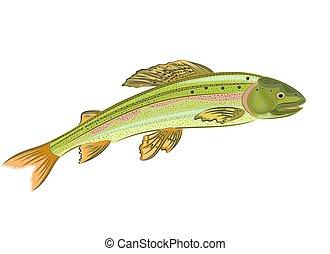 Grayling, salmon-predatory fish