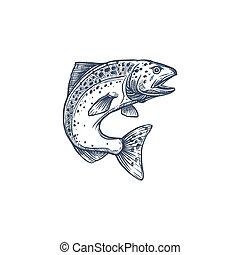 grayling, skizze, whitefish, freigestellt, forelle, lachs, oder
