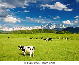 Landscape with grazing calves and snowy mountains