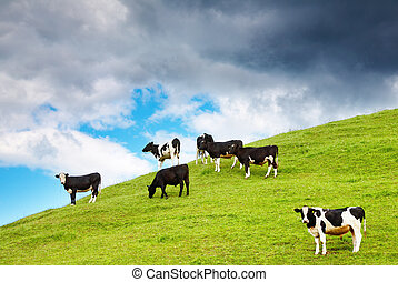 Rural landscape with grazing calves and cloudy sky