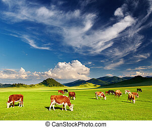 Mountain landscape with grazing cows and blue sky