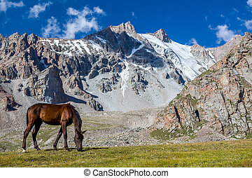 Grazing horse at sunny day in high snowy mountains