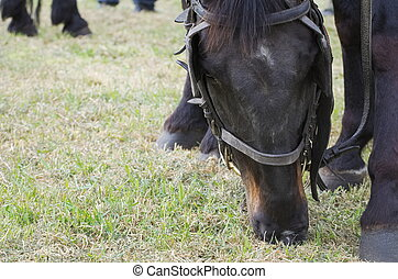 Grazing Horse Closeup
