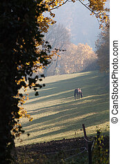 Grazing horse in morning mist
