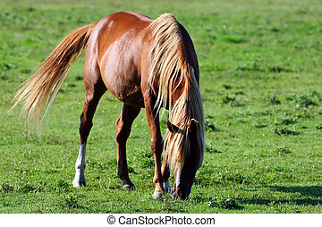 A photo of a golden colored horse grazing in the sunshine.