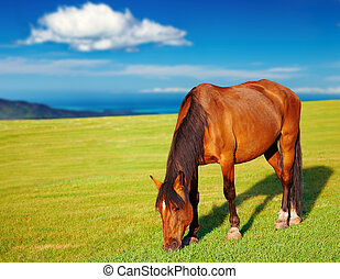 Landscape with grazing horse and blue sky