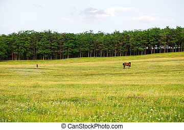 Grazing horse on the field.